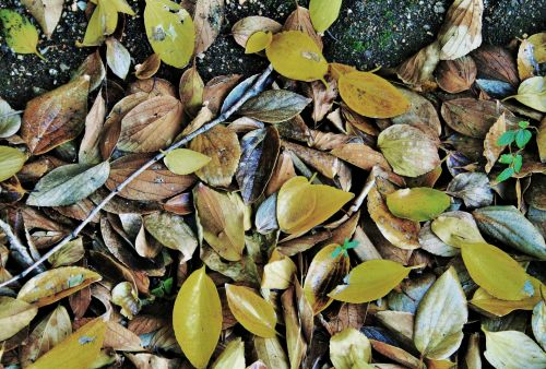 Array Of Yellow And Dry Leaves