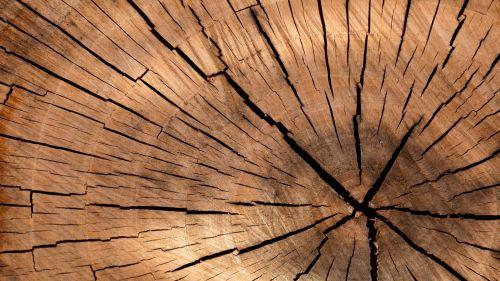 medis, senas, siena, mediena, dėvėti, ruda, grūdai, skydas, modelis, dizainas, Grunge, dėvėti, medžio dirbiniai, fono medienos sienų plokštės