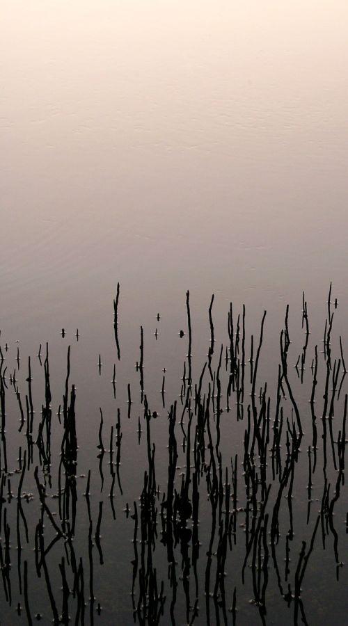 art mangroves moody