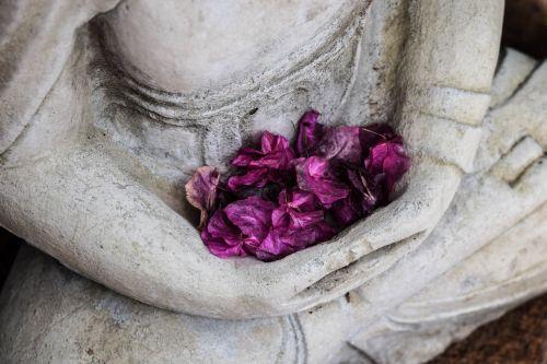 art dried petals flowers