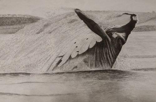 art sketch sketching
