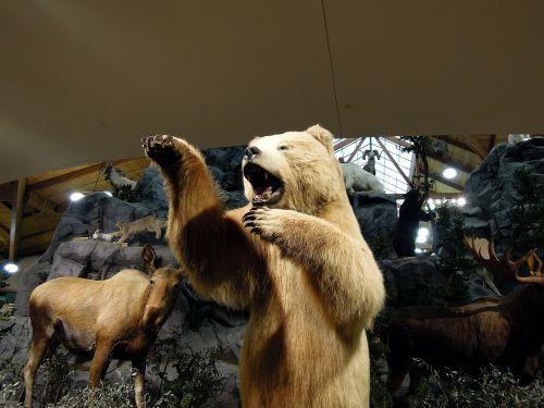 artic bear polar bear bear