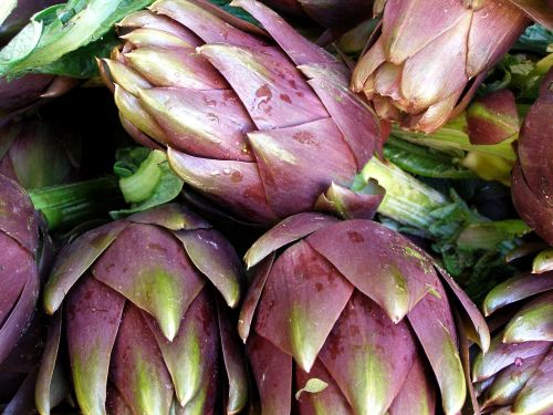 artichoke vegetables plant