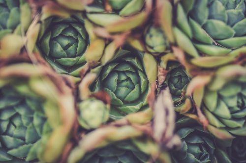 artichoke blur close-up