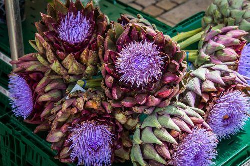 artišokas,daržovės,artišokų gėlė,žiedas,žydėti,ūkininkų vietos rinka,artišokų augalas,maistas