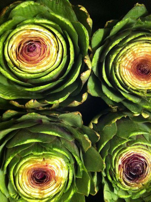 artichoke food plant