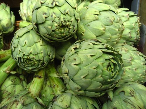 artichokes vegetable nature