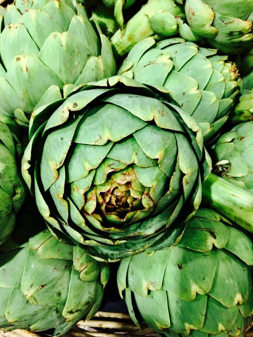 artichokes green eat