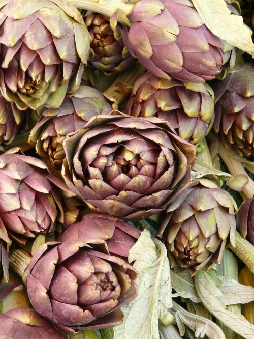 artichokes vegetables plant