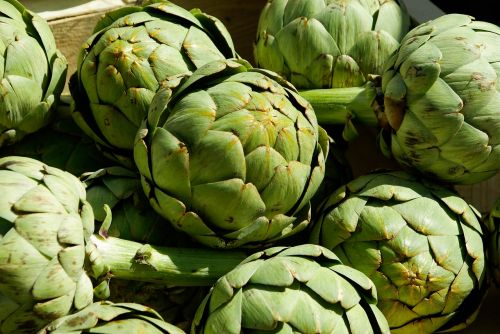 artichokes vegetables agriculture