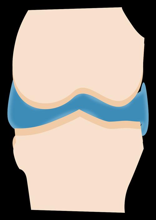 articulation  capsule  synovial fluid