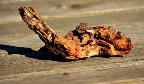 artifact wood piece root