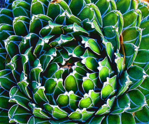 piešimas, fonas, kaktusas, cilindras, šviesus & nbsp, žalia, plokšti & nbsp, nustatyti, peržiūrėkite & nbsp, žemyn, meninis kaktusas kaktusas