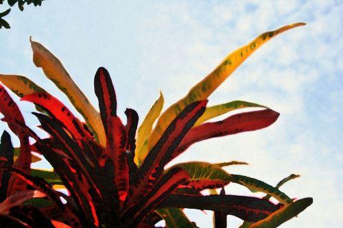 Artistic Croton Leaves