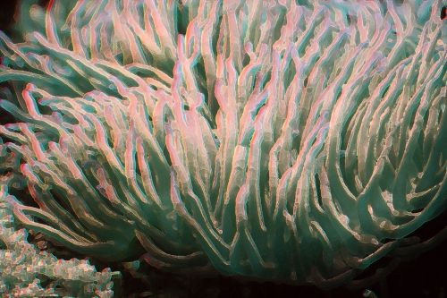 Artistic Image Of Coral