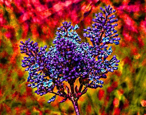 Artistic Purple Floral