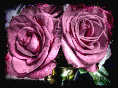 Artistic Roses 2