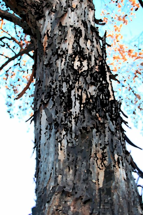 Arty Tree Trunk With Loose Bark