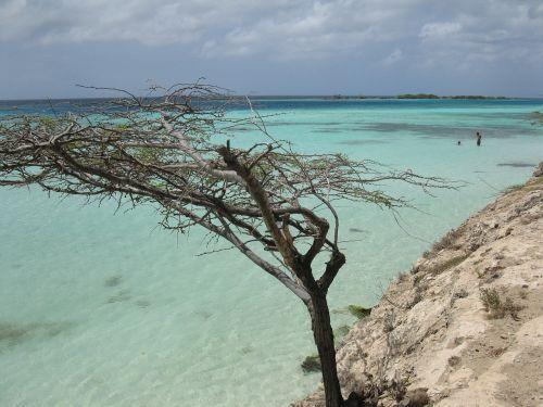 aruba tree beach