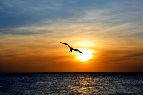 aruba bird nature