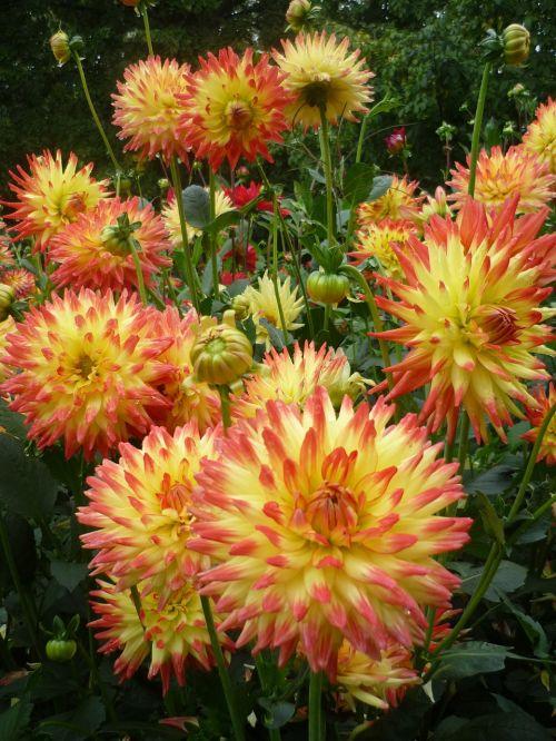 as lien flowers