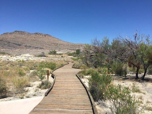 ash springs  boardwalk  desert