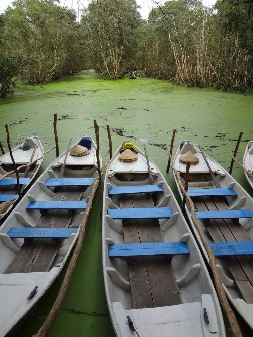 asia mangroves mekong delta