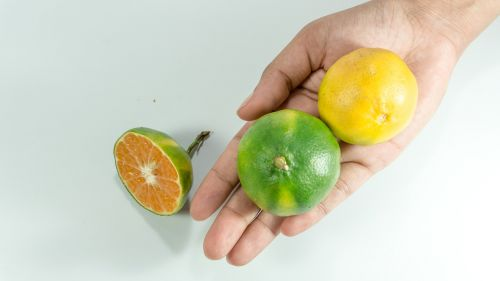 asian green oranges hand