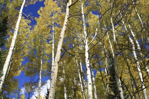 aspen colorado wilderness