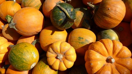 Assorted Squash And Gourds