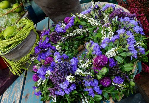 asters balcony blue