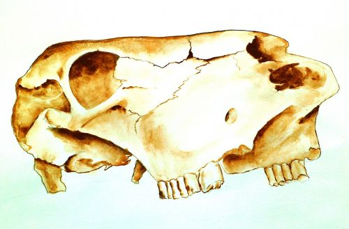 atelier school cow skull drawing task