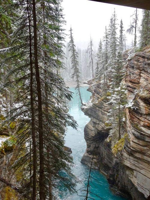 athabasca canyon tree edge