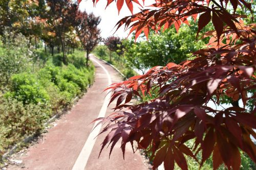 athletic track red leaves the scenery