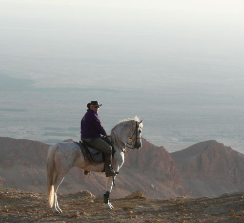 atlas tunisia horse
