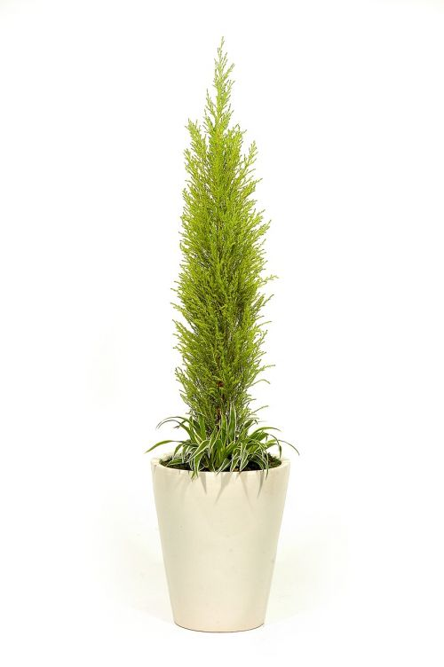 atmosphere potted plant plants