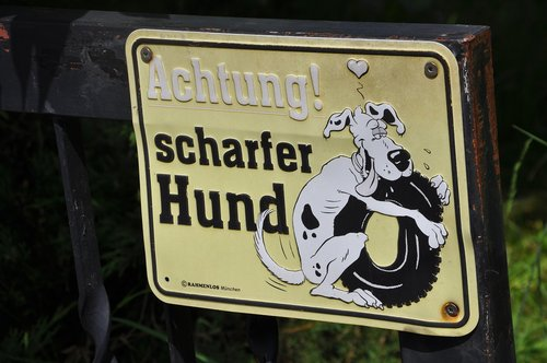 attention dog  dog  shield