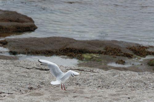 Landing Of The Bird