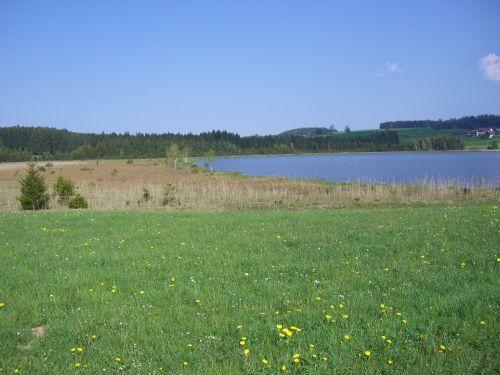 attlesee moor meadow