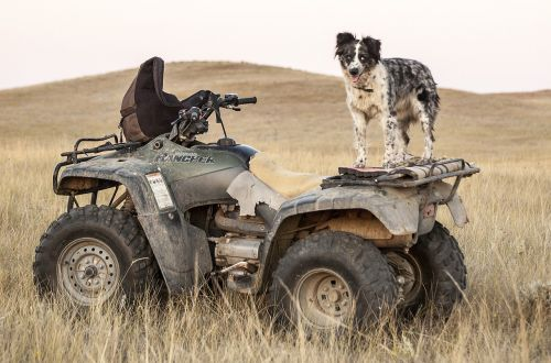 atv dogs four wheeler