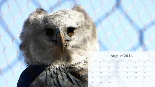 August 2016 Calendar Of Eagle