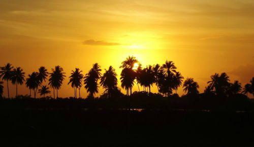 aurora coconut trees sol