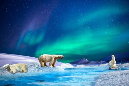 aurora polar bears river