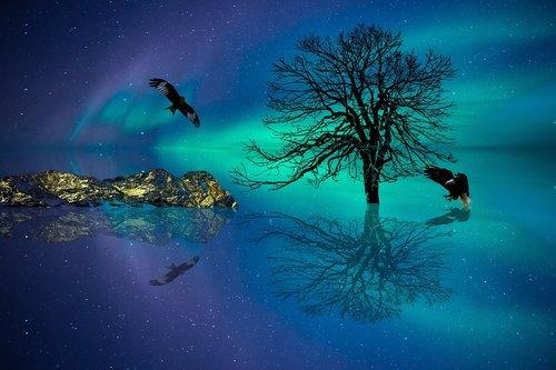 aurora  arctic  night