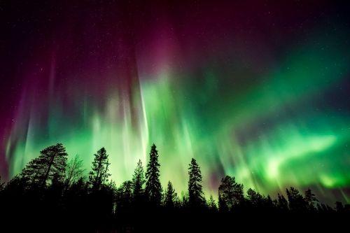 aurora borealis northern lights forest