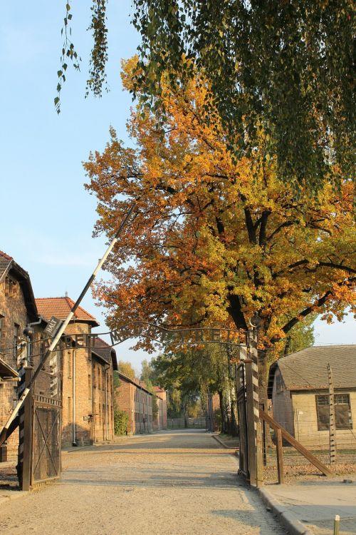 auschwitz,vartai,alėja,naikinimo stovykla,koncentracijos stovykla,darbo stovykla,mirtis,muziejus,paminklas,ruduo,medis,geltonieji lapai,lapija,gamta