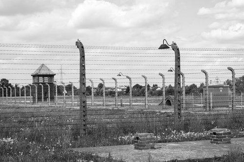 auschwitz  birkenau  the holocaust