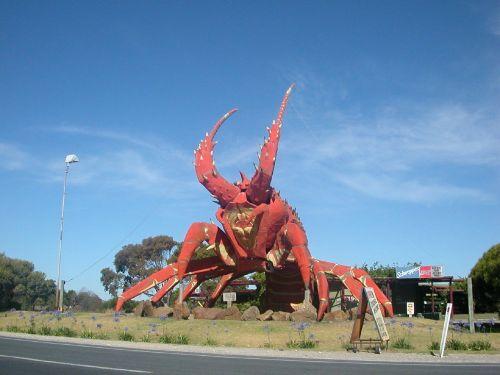 australia lobster giant lobster