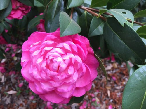 australia flowers perth