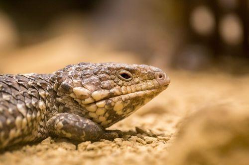australia outback animal